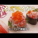 ダウンタウンCM動画。無添くら寿司 本ズワイガニフェア